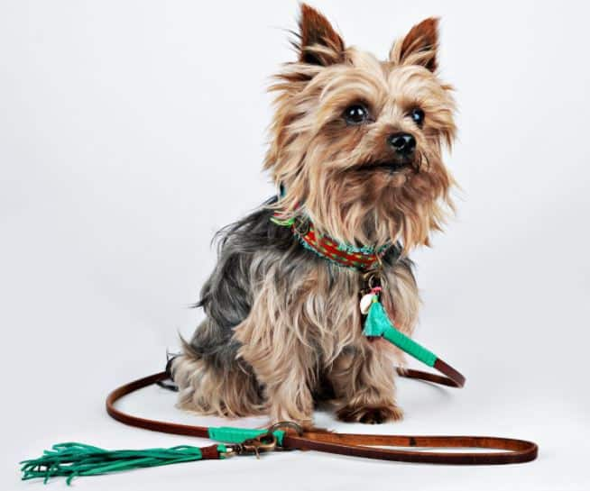 product description copywriting for pet companies is my expertise. Take a look at this cute leash description